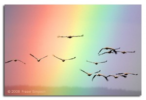 Photo of birds flying towards a big rainbow
