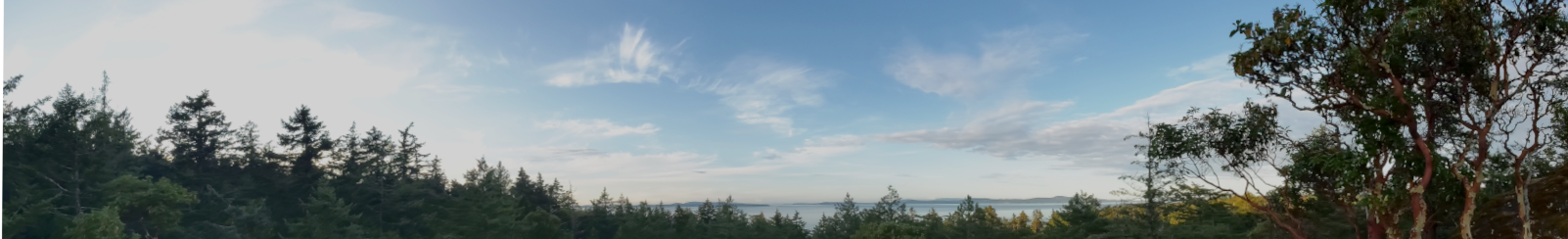 Wide photo with ocean peaking through a fir forest canopy. Blue sky with six wispy clouds. Arbutus in right foreground.